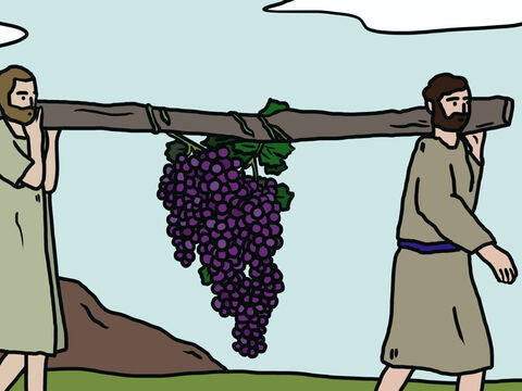 When they reached the Valley of Eshkol, they cut off a branch bearing a large cluster of grapes to show Moses. Two of them carried it on a pole between them, along with some pomegranates and figs. – Slide 8