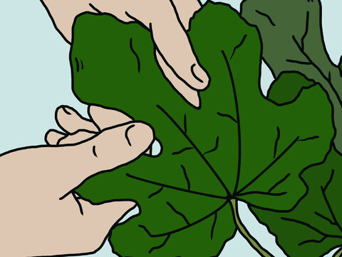 So they sewed fig leaves together and covered themselves. – Slide 14