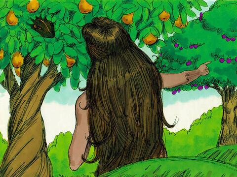 The woman replied, 'We may eat fruit from the trees in the garden, but God told us not to eat fruit from the tree of the knowledge of good and evil, or touch it, or we will die.' – Slide 3