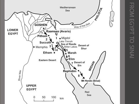 """The Israelites journey from Egypt to Sinai.  <br/>1. After ten plagues that occur over three years, the Pharaoh summons Moses and Aaron and commands them to take the Israelites – and their disastrous curses – away from Egypt. The Israelites set out from Raamses on the 14th day of the Jewish month of Nisan. They march towards Succoth and meet up with other fellow Hebrews escaping from Pithom.  (Exodus 12:1-51) <br/>2. God leads the Israelites along the desert road towards the Sea of Reeds (Hebrew, 'Yam-suf'). (Exodus 13:17-18) <br/>3. The Israelites move further south and camp at Etham on the edge of the Eastern Desert. The LORD goes ahead of them as a pillar of cloud by day and a pillar of fire by night. (Exodus 13:20-22) <br/>4. The Israelites travel through the tidal salt marshes to the north of the Gulf of Suez and cross the shallow Sea of Reeds while Moses holds out his hand and the LORD drives the water back """"with a strong east wind"""". The Egyptians pursue the Israelites but their chariot wheels become stuck in the mud. The water returns as the wind subsides, covering the chariots and drowning the heavily armed Egyptian soldiers. (Exodus 14:1-31) <br/>5. The Israelites travel through the Desert of Shur for three days. At Marah the water is too bitter to drink until Moses throws in a piece of wood to sweeten it. (Exodus 15:22-26) <br/>6. They reach Elim, a desert oasis with twelve springs and 70 palm trees.  (Exodus 15:27) <br/>7. Crossing the arid Desert of Sin, the Israelites complain of hunger. So God promises to feed them. That evening, a large flock of quails flies into the camp. Each morning after that, the Israelites are fed with 'manna' - a small white seed looking like frost on the ground. When they move on to Rephidim, there is no water. Moses strikes the rock and water flows from it. (Exodus 16:1-17:7)   <br/>8. Three months after leaving Egypt, the Israelites reach the Sinai Desert. They spend two days preparing to meet God. On the third day, Moses re"""