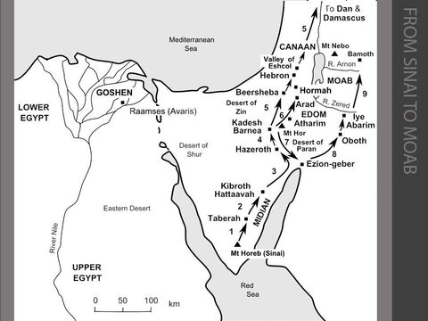"""The Israelites journey from Sinai to Moab.  <br/>1. Fourteen months after leaving Egypt, the Israelites turn north and travel from Mt Sinai to the Desert of Paran. At Taberah, the people complain and the LORD sends a fire which destroys part of the camp. (Numbers 10:11-11:3)   <br/>2. The Israelites grumble again about the lack of meat. God hears their complaint and a flock of quails is blown in from the sea. The LORD sends an epidemic on those who crave other foods. The place is called Kibroth Hattaavah ('graves of craving'). (Numbers 11:4-34) <br/>3. They move on and reach Hazeroth. Miriam, Moses' sister, criticises Moses and her skin becomes leprous. She is only healed after Moses pleads with God to forgive her. (Numbers 11:35-12:16) <br/>4. The Israelites reach Kadesh Barnea, an oasis in the Desert of Paran. ( Numbers 13:1-25) <br/>5. Moses selects a man from each of the twelve tribes to go and explore the 'promised land' of Canaan. The twelve spies report that the fertile land flows with milk and honey, but the cities are well fortified and the inhabitants are strong. The people want to return to Egypt. The Israelites are condemned by the LORD to forty years as nomadic shepherds in the desert. (Numbers 13:1-14:35) <br/>6. Some Israelites change their minds and decide to attack. But the first attempt to invade the 'promised land' fails because the people attack against God's wishes. The Amelekites and Canaanites pursue the defeated Israelites as far as Hormah. (Numbers 14:39-45) The Israelites stay at the oasis of Kadesh Barnea for """"a long time"""", probably for most of the next thirty-eight years. (Deuteronomy 1:46) The Israelites leave Kadesh in c.1407BC and travel north towards Canaan. The Canaanite King of Arad attacks them on the road to Atharim and many Israelites are led in captivity north to Arad.  After a daring raid, the King of Arad is eventually defeated at Hormah, but the Israelites decide that it would be more prudent to retreat southwards. (Numbers 2"""