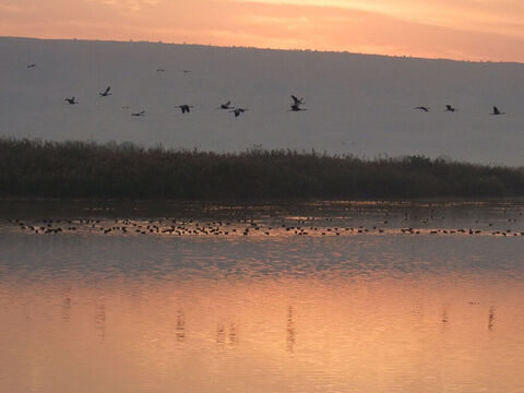 Flock of birds over Galilee. <br/>Jesus said, 'Look at the birds of the air, for they neither sow nor reap nor gather into barns; yet your heavenly Father feeds them. Are you not of more value than they? (Matthew 6:26). <br/>Photo credit: Yehudit Garinkol. – Slide 17