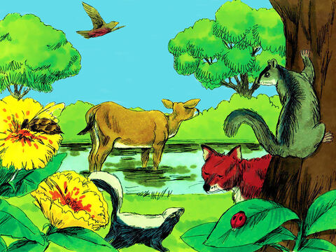 God created all kinds of species of wild animals and cattle and reptiles. He was pleased with His creation. – Slide 11