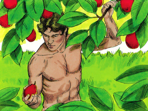 Adam could eat of any of the fruit growing in the garden. – Slide 14