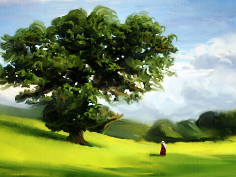 God appeared to Abram, at Moreh, by a large oak tree. <br/>'To your offspring I will give this land,' said He.  <br/>Then Abram quickly built an altar.  <br/>He worshiped God without falter. – Slide 3