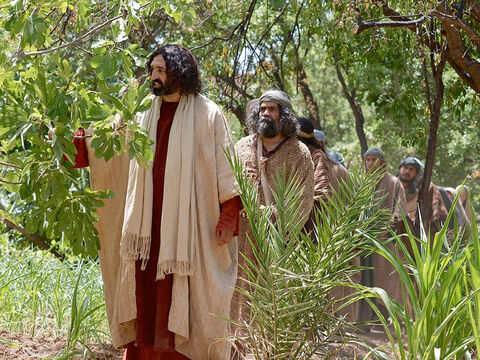 The next day as they were leaving Bethany, Jesus was hungry. Seeing in the distance a fig tree in leaf, He went to find out if it had any fruit. – Slide 1
