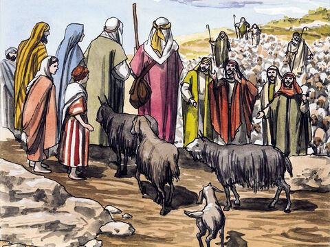 … and all who heard it were astonished at what the shepherds said. – Slide 11