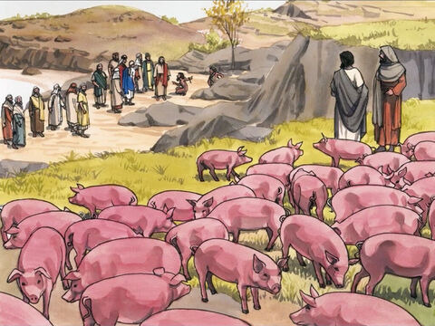 A large herd of pigs was feeding some distance from them. – Slide 4
