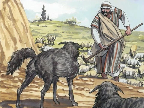 When Jesus saw the crowds, He had compassion on them because they were bewildered and helpless, like sheep without a shepherd. – Slide 4