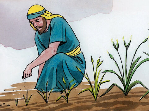 'The kingdom of heaven is like a mustard seed that a man took and sowed in his field. – Slide 9