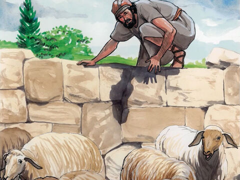 Jesus said, 'I tell you the solemn truth, the one who does not enter the sheepfold by the door, but climbs in some other way, is a thief and a robber. – Slide 1