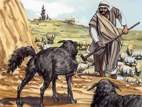 'I am the good shepherd. The good shepherd lays down his life for the sheep. – Slide 9