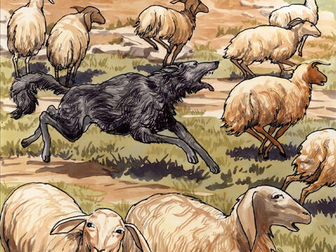'So the wolf attacks the sheep and scatters them. Because he is a hired hand and is not concerned about the sheep, he runs away. – Slide 11
