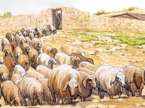 'I have other sheep that do not come from this sheepfold.  I must bring them too, and they will listen to my voice, so that there will be one flock and one shepherd. – Slide 13