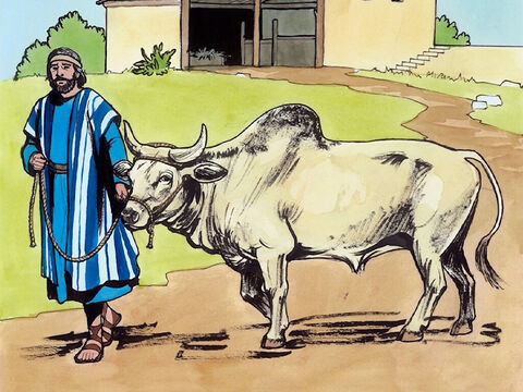 Then the Lord answered him, 'You hypocrites! Does not each of you on the Sabbath untie his ox or his donkey from its stall, and lead it to water?' – Slide 6