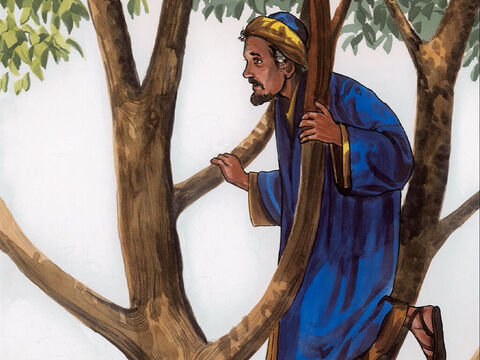 So he ran on ahead and climbed up into a sycamore tree to see him, because Jesus was going to pass that way. – Slide 4