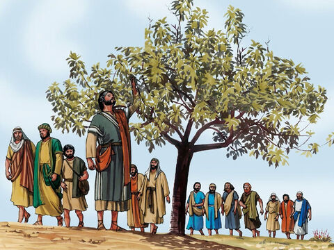 Now the next day, as they went out from Bethany, Jesus was hungry. After noticing in the distance a fig tree with leaves, he went to see if he could find any fruit on it. – Slide 1