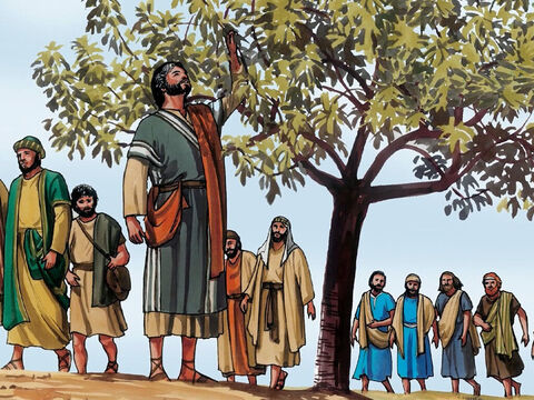 When He came to it he found nothing but leaves, for it was not the season for figs. He said to it, 'May no one ever eat fruit from you again.' And his disciples heard it. – Slide 2