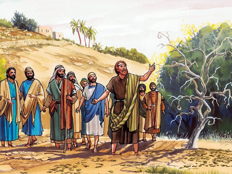 In the morning as they passed by, they saw the fig tree withered from the roots. Peter remembered and said to him, 'Rabbi, look! The fig tree you cursed has withered.' – Slide 8