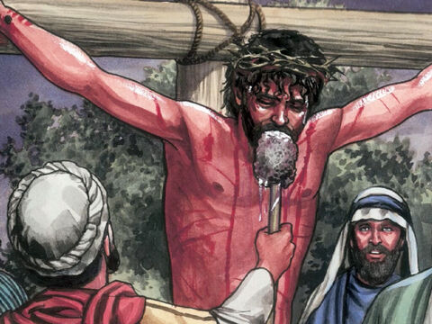 So they put a sponge soaked in sour wine on a branch of hyssop and lifted it to His mouth. – Slide 12
