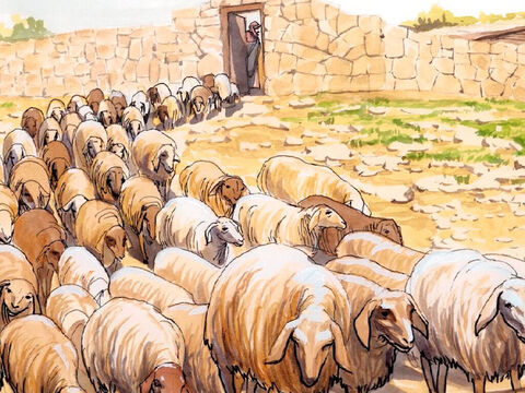 Jesus replied, 'Feed my sheep. I tell you the solemn truth, when you were young, you tied your clothes around you and went wherever you wanted, but when you are old, you will stretch out your hands, and others will tie you up and bring you where you do not want to go.' – Slide 16