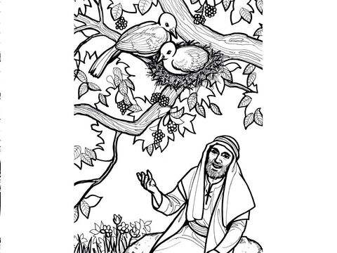 Jesus says, 'Foxes have dens and birds have nests, but the Son of Man has no place to lay His head.' Luke 9:58 – Slide 4