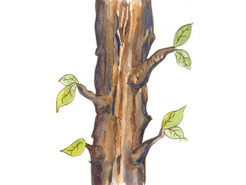 He looked ahead down the road and saw a sycamore tree. He decided to climb the tree so that he could see Jesus. – Slide 6