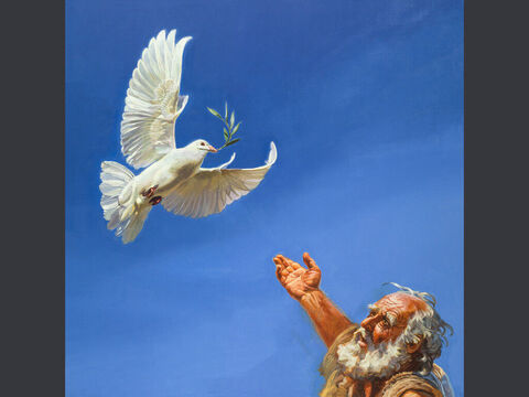 The dove returns. <br/>When the dove returned to him in the evening, there in its beak was a freshly plucked olive leaf! Then Noah knew that the water had receded from the earth. <br/>Genesis 8:11 <br/>Full text: Genesis 8:8-11 – Slide 4
