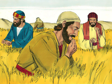 It was the Sabbath day of rest. Jesus and His disciples were travelling through some fields of grain. The disciples were hungry and began to pick some heads of grain, rub them in their hands and eat the kernels. – Slide 1