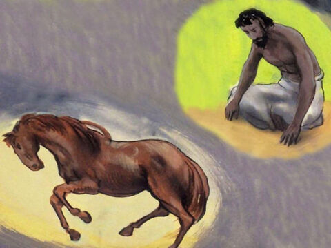 'Have you given the horse its strength? Do you clothe its neck with a flowing mane? – Slide 53