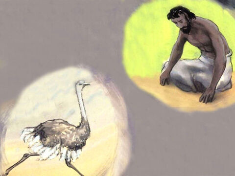 'The wings of an ostrich flap joyfully. She does not care that a stranger might trample on her eggs, for God did not give her wisdom, or a share of understanding.' The Lord continued to question Job about the wonders of His creation. And Job remained silent. – Slide 55