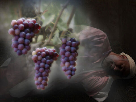 The cupbearer went first. 'In my dream I saw a vine in front of me, and on the vine were three branches.' – Slide 14