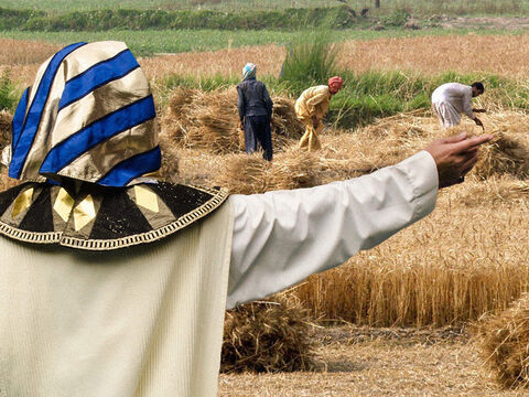 Just as Joseph had predicted, there were seven years of bumper harvests in Egypt. During these years Joseph requisitioned for the government a portion of all the crops grown. – Slide 1