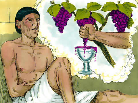 The cupbearer went first. 'In my dream I saw a vine with three branches. As soon as it budded, it blossomed,and its clusters ripened into grapes.Pharaoh's cup was in my hand. I took the grapes, squeezed them into Pharaoh's cup and gave it to him.' – Slide 3