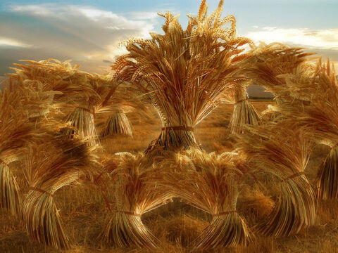 He dreams that he and his brothers are binding sheaves of grain. Suddenly his sheaf stands bolt upright and his brothers' sheaves gather round and bow down before his. – Slide 9