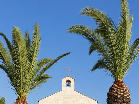 Palms by an ancient church. – Slide 21