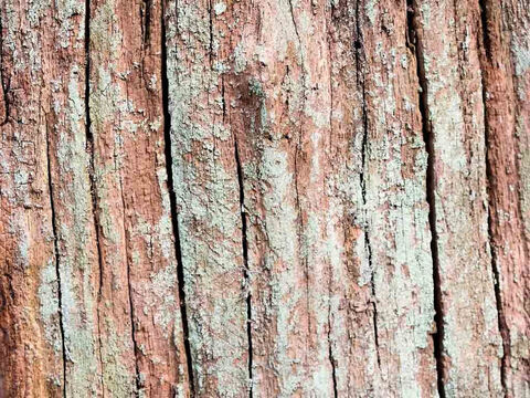 Tree stump texture. – Slide 2
