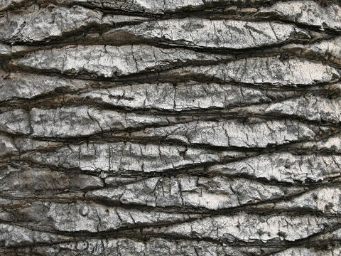Palm bark. – Slide 3