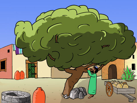 Zacchaeus quickly ran ahead of the crowd to the big tree ... – Slide 19