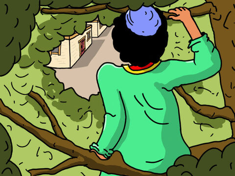 Zacchaeus now had a very good view as he sat up in the tree. Oh how he longed for Jesus to come by so he could see Him. – Slide 24