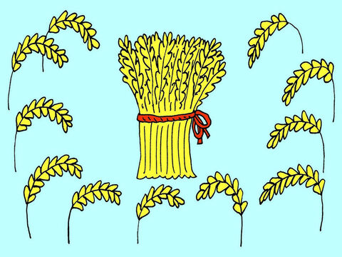 'We were tying together stalks of ripe grain into bundles of sheaves,' he told them. 'My sheaf of grain stood up straight, but all your sheaves of grain bowed down to mine.' – Slide 3
