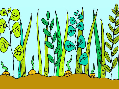Some seeds fell between weeds. The weeds grew bigger than the new plants and they had no room to grow. – Slide 6