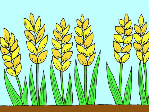 But some seed fell onto good ground and grew into big, strong plants. The plants had lots of new seed for the farmer's harvest. – Slide 7