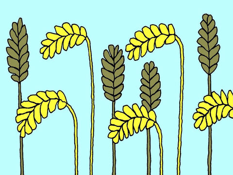 'When the useless weeds and the good wheat were fully grown and the wheat was ready to harvest, it was easy to tell the weeds from the wheat. – Slide 6