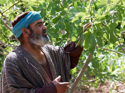 Jesus warned His listeners that those who do not repent will perish (v5). He then told this parable, 'A man planted a fig tree in his garden and for the next three years examined it again and again to see if he could find any fruit on it. But he was always disappointed. – Slide 1