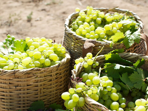 """When evening came an hour later, the owner of the vineyard said to his foreman, """"Call the workers so they get their wages. – Slide 10"""