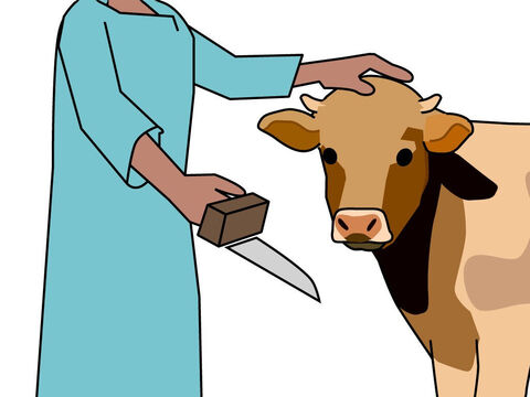 The person making the offering had to put his hand on the animal's head. It was a symbol of putting that person's sin on to the animal to be sacrificed. – Slide 3