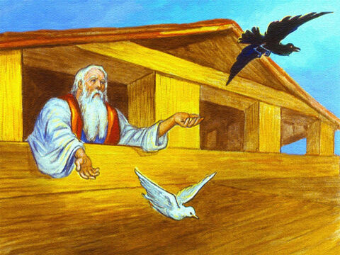 Not long after that Noah sent out a raven and a dove. – Slide 40