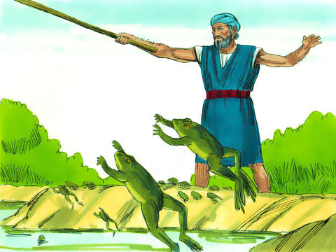 Exodus 8 Seven days later, God told Moses to tell Aaron to stretch his staff over the streams, canals and ponds to make frogs come out onto the land. – Slide 4