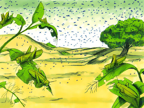 So Moses raised his staff over Egypt. An east wind blew all night bringing in a swarm of locusts. They covered the ground making it look black and ate everything growing in the fields until nothing green remained on plant or tree. – Slide 3